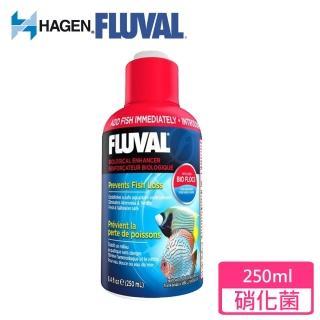 【HAGEN富濾霸】高濃縮全方位硝化菌(250mL)